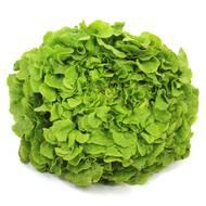 3760245540408 - Bio Dmin Coin - Feuille de Chêne Verte Bio