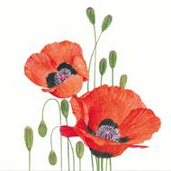 4021766258975 - Paperproducts Design - Serviettes Coquelicots