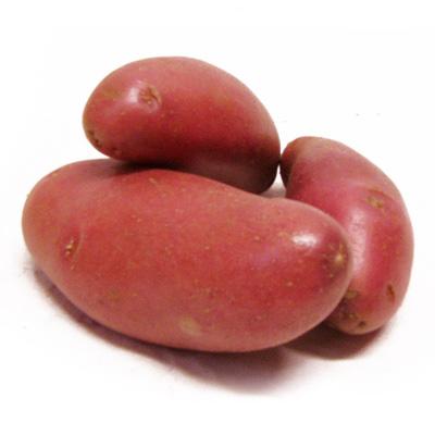 les jardins d 39 alice pomme de terre rouge ch rie 2 5kg. Black Bedroom Furniture Sets. Home Design Ideas
