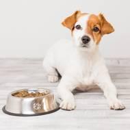 Pack pour chien (photo non contractuelle)
