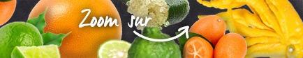 Conseils pour trouver les citrons