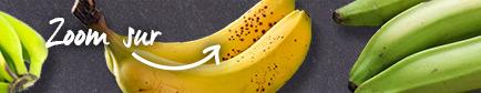 Conseils pour trouver les bananes