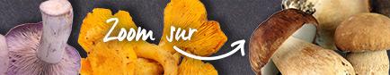 Conseils pour trouver les champignons