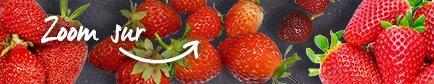 Conseils pour trouver les fraises