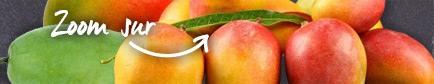 Conseils pour trouver les mangues