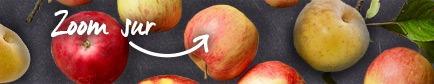 Conseils pour trouver les pommes