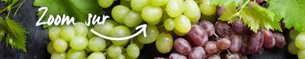 Conseils pour trouver le raisin