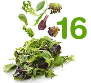16 variétés de salades