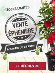 Vente éphémère Truffaut