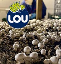 Lou, champignon français