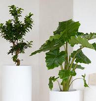 Plantes pour l'intérieur