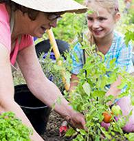 Plantes potagères et fruitiers