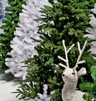 Sapins de Noël naturels