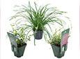 Plantes Vivaces et Graminées