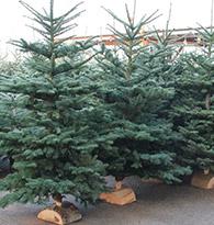 Sapins de Noël naturels et artificiels.