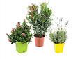 Plant Potager et Aromatique