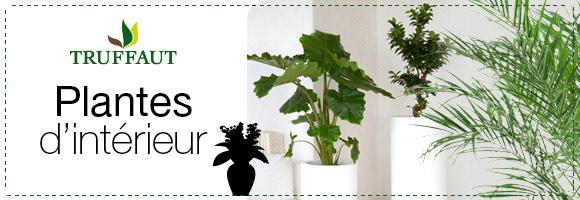 Boutique plantes vertes dans plantes pour l 39 interieur sur for Catalogue plantes vertes